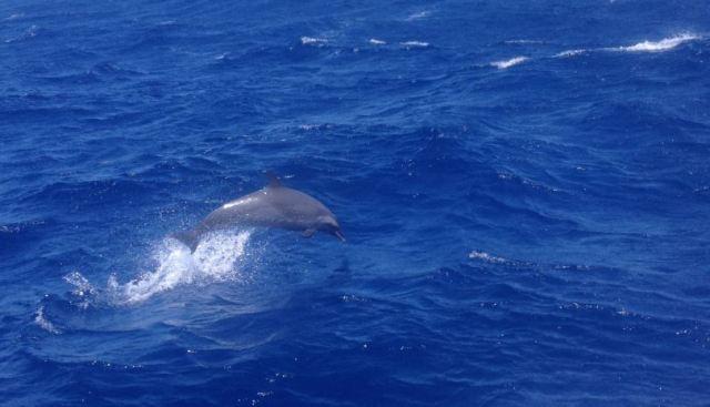 Delphin neu